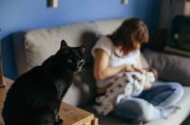 Alletant l'A. En primer pla la Guiru (gat negre)